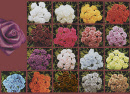 mini-roses-satin